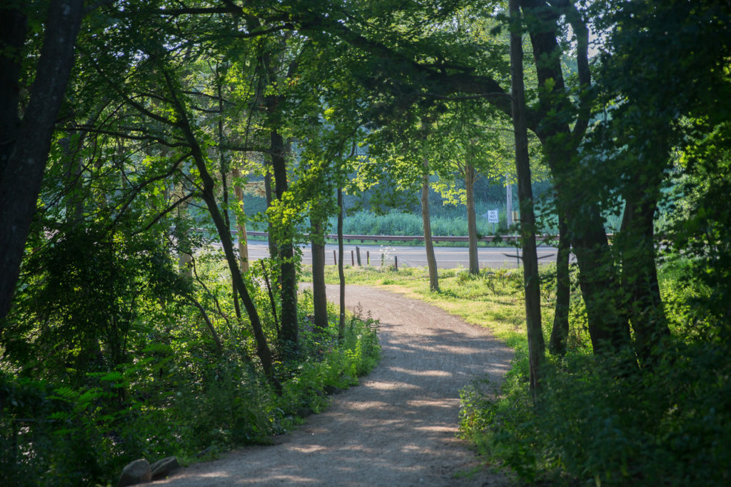 Shaded trail at Hammonasset